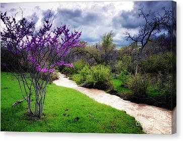 Oklahoma Spring Storm Canvas Print by Tamyra Ayles