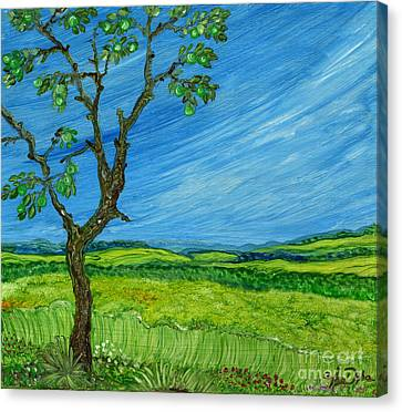 Old Apple Tree Canvas Print