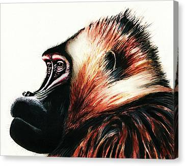 Old Baboon Animal Art Drawing Canvas Print