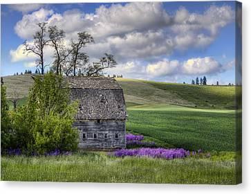 Old Barn - Palouse - Washington Canvas Print by Nikolyn McDonald