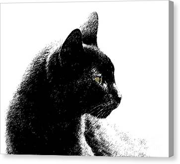 Canvas Print featuring the photograph Old Black Cat Two by Lila Fisher-Wenzel