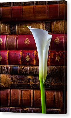 Old Books And Calla Lily Canvas Print by Garry Gay