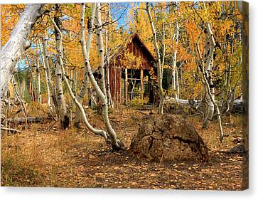 Old Cabin In The Aspens Canvas Print by James Eddy