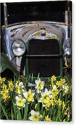 Ford Plant Canvas Print - Old Car And Daffodils by Garry Gay