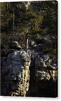 Canvas Print featuring the photograph Old Cedar Buffalo National River by Michael Dougherty