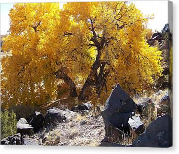 Old Cottonwood Below Black Rocks Canvas Print