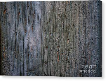 Old Cracked Wood Background Canvas Print by Elena Elisseeva