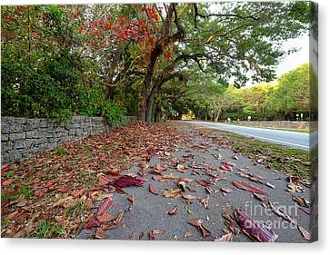 Old Cutler Road Coral Gables Canvas Print by Eyzen M Kim