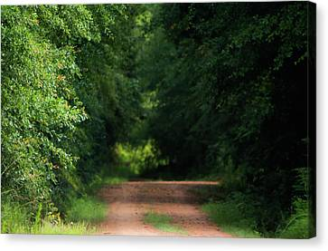 Old Dirt Road Canvas Print by Shelby Young
