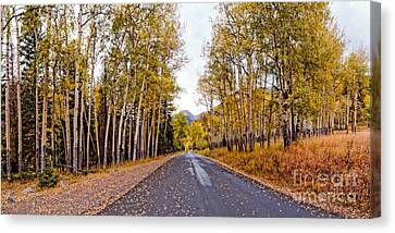 Old Fall River Road With Changing Aspens - Rocky Mountain National Park - Estes Park Colorado Canvas Print by Silvio Ligutti