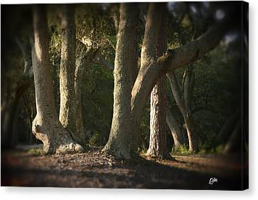 Canvas Print featuring the photograph Old Friends Meet In The Woods by Phil Mancuso