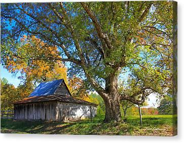 Fall Scenes Canvas Print - Old Friends Rustic Barn Majestic Oak Tree Art by Reid Callaway