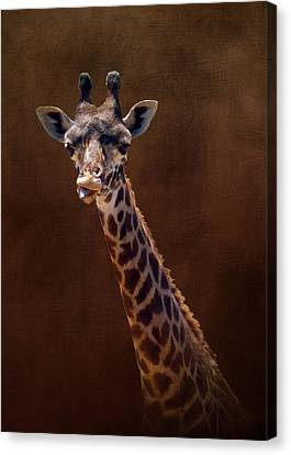 Old Funny Face Giraffe Canvas Print by Carla Parris