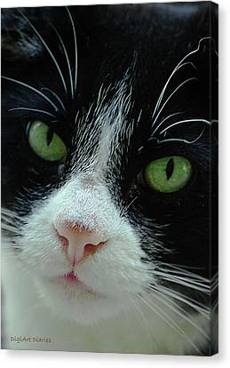 Old Green Eyes Canvas Print by DigiArt Diaries by Vicky B Fuller