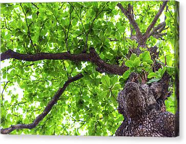 Canvas Print featuring the photograph Old Green Tree by Jingjits Photography