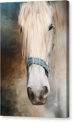 Canvas Print featuring the photograph Old Grey by Robin-Lee Vieira