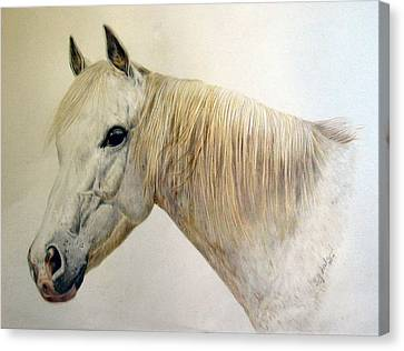 Old Grey Canvas Print by Sue Ireland