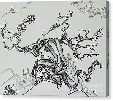 Old Juniper Dancing With The Wind -- Field Sketch Canvas Print by Dawn Senior-Trask