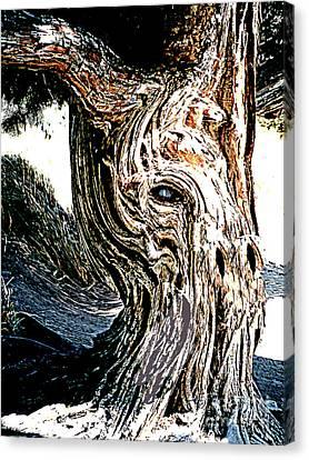 Canvas Print featuring the digital art Old Juniper Mule Tree by Merton Allen