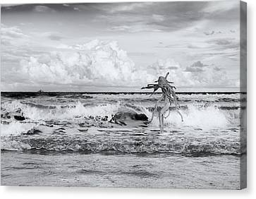 Canvas Print featuring the photograph Old Man In The Sea by Carolyn Dalessandro