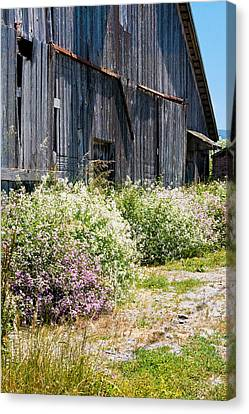 Old Milking Barn Canvas Print