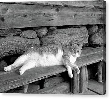 Canvas Print featuring the photograph Old Mill Cat by Sandi OReilly