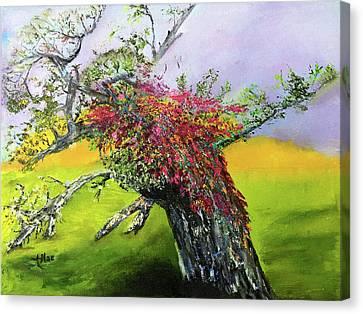 Old Nantucket Tree Canvas Print