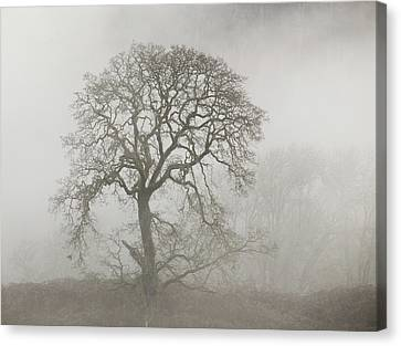 Canvas Print featuring the photograph Old Oak Tree And Fog by Angie Vogel