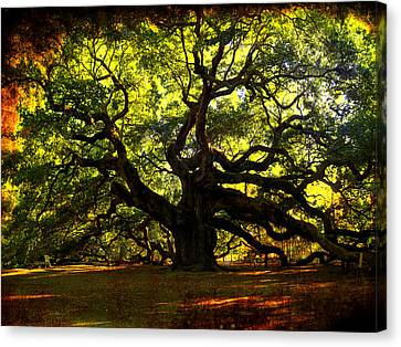 Old Old Angel Oak In Charleston Canvas Print by Susanne Van Hulst