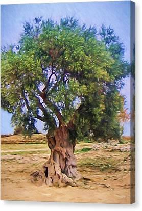 Sicily Canvas Print - Old Olivetree by Lutz Baar
