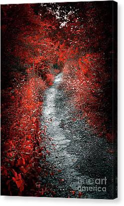 Old Path In Red Forest Canvas Print