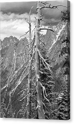 Old Pines Cascades Canvas Print by Peter J Sucy