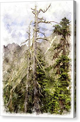Old Pines Cascades Wc Canvas Print by Peter J Sucy