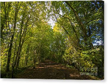 Old Railway Line Canvas Print by Nichola Denny