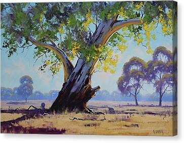 Old River Gum Australia Canvas Print by Graham Gercken