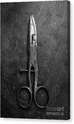 Hair Cuts Canvas Print - Old Scissors by Edward Fielding