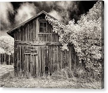 Old Shed In Sepia Canvas Print by Greg Nyquist