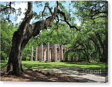 Civil War Site Canvas Print - Old Sheldon Church Ruins With Live Oak by Carol Groenen
