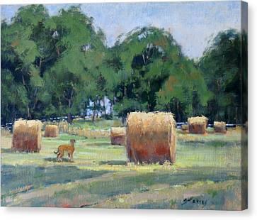 Old Smyrna Farms Canvas Print by Sandra Harris