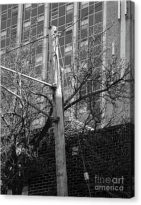 Old Telephone Pole Canvas Print by Phil Perkins