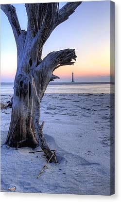 Old Tree And Morris Island Lighthouse Sunrise Canvas Print by Dustin K Ryan