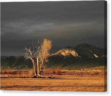 Sunset On The Old Cottonwood Canvas Print