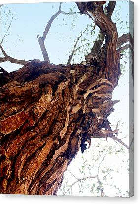 Old Tree Canvas Print by Marty Koch