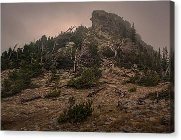 Old Trees Reaching Through The Fog Canvas Print