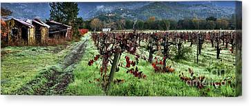 Old Vineyard Barns Canvas Print by Jon Neidert