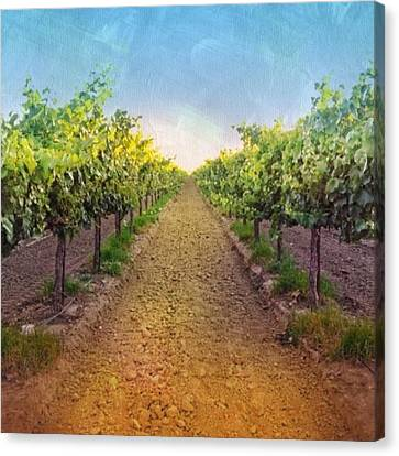 Food And Beverage Canvas Print - Old #vineyard Photo I Rescued From My by Shari Warren