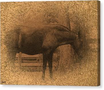 Old West Horse Canvas Print by Debra     Vatalaro