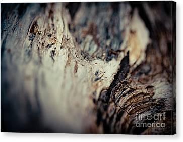 Old Wood Abstract Vintage Texture Fotografika Canvas Print