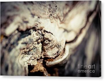 Old Wood Abstract Vintage Texture Fotografika.lv Canvas Print
