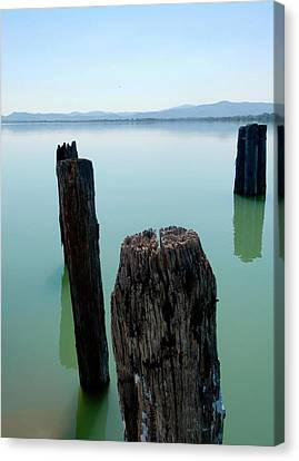 Old Wooden Boat Piles Canvas Print by Dorothy Berry-Lound